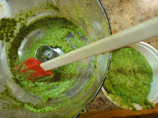 Fresh basil pesto for Caprese Veggie Patties with Basil Arugula Pesto