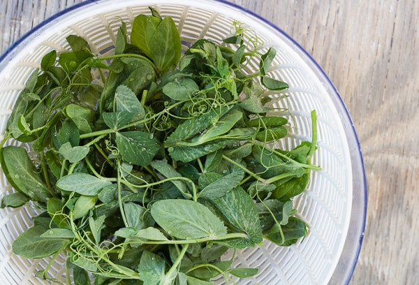 washed Pea Shoots in a salad spinner