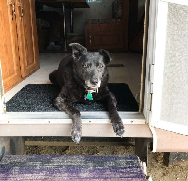 Carlos the dog looking out the trailer door.